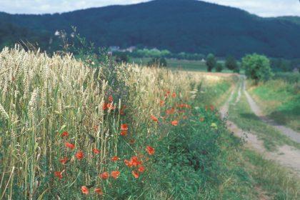 Water soil biodiversity field stripe flowers