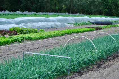 food policy production eu green deal farm to fork