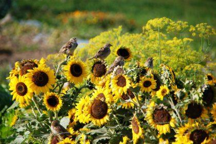 organic food farming climate change biodiversity crisis